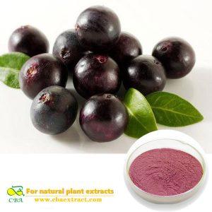 100% Natural Organic Acai Berry Extract Powder