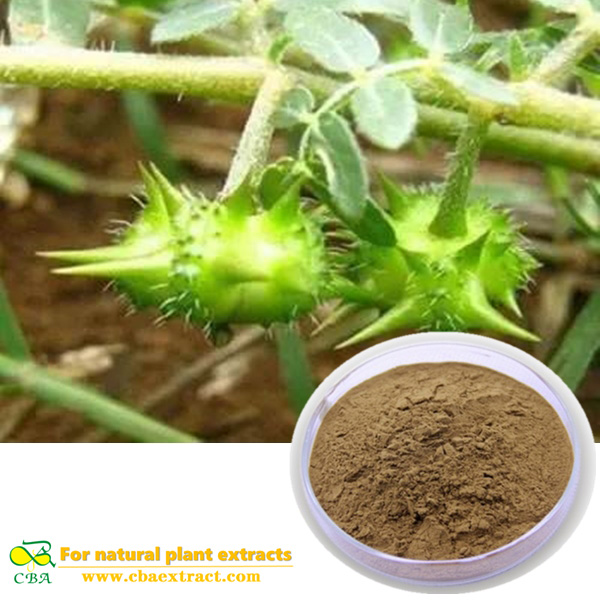 100% Pure Natural Good Quality Herbal Plant Powder Tribulus Terrestris Extract 95%