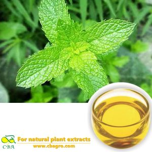 2018 CBA Bulk Peppermint Oil Peppermint Essential OilMint Oil at Sale Price