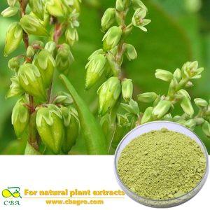 2018 CBA high quality japonica rutin bulk,sophora japonica rutin extract