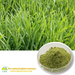 Buck wheat extract Barley seedling powder