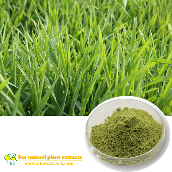 Buck wheat extract Barley seedling powder