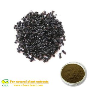 Organic Polyrachis Ant extract black ant extract powder black ant extract