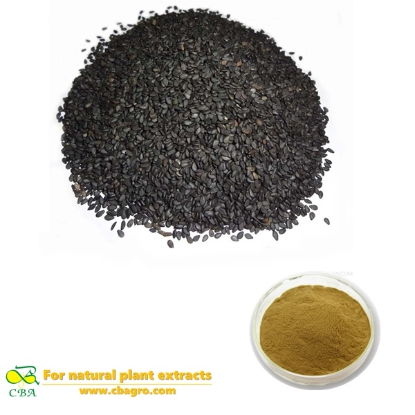 Leek seed extract powder liliaceous plant leek Allium tuberosum Rottler seed