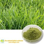 Buck wheat extract Barley seedling powder Rhizoma Fagopyri Dibotryis
