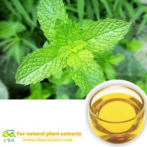 CBA Bulk Peppermint Oil Peppermint Essential Oil Mint Oil at Sale Price