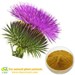 Natural Milk Thistle Extract Silybum marianum. (L.)Gaertner