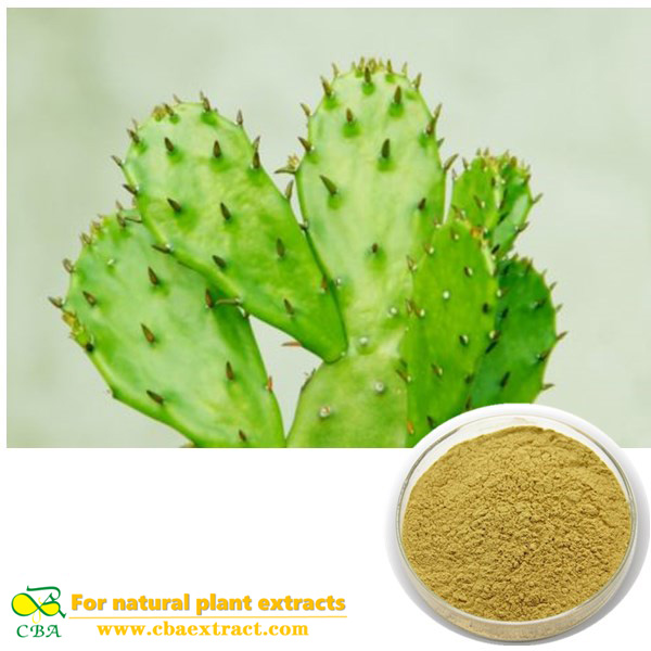 Cactus Extract Caralluma Fimbriata Extract powder