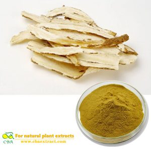 Natural Chinese Angelica Extrat (EAS)1% Ligustilide