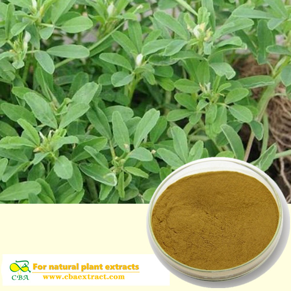 FENUGREEK SEED EXTRACT Pure natural plant extracts fenugreek seed p.e supplier testosterone powder