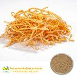 Health supplement 30% Polysaccharides Cordyceps militaris extract/Cordyceps militaris extract powder