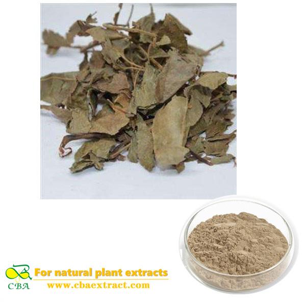 Supply Best Quality Cyclocarya Paliurus Extract