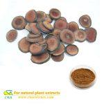 CBA high quality deer antler velvet extract powder no additive