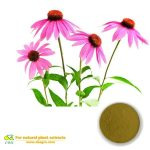 Best Quality Polyphenols 4% Echinacea Extract
