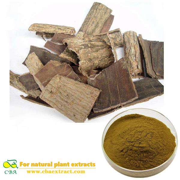 High Quality eucommia ulmoides extract eucommiaceae extract powder Eucommia ulmoides Oliv