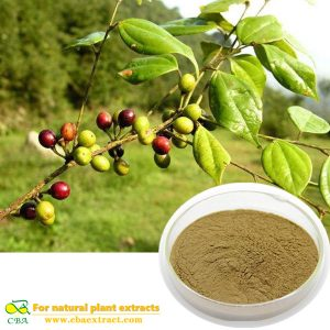 Factory Price Combined Spicebush Root Extract Powder
