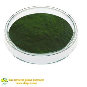 Food grade organic chlorella spirulina powder use for weight loss