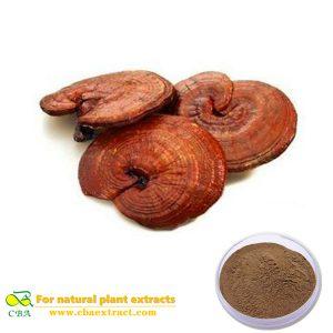 Natural ganoderma lucidum extract