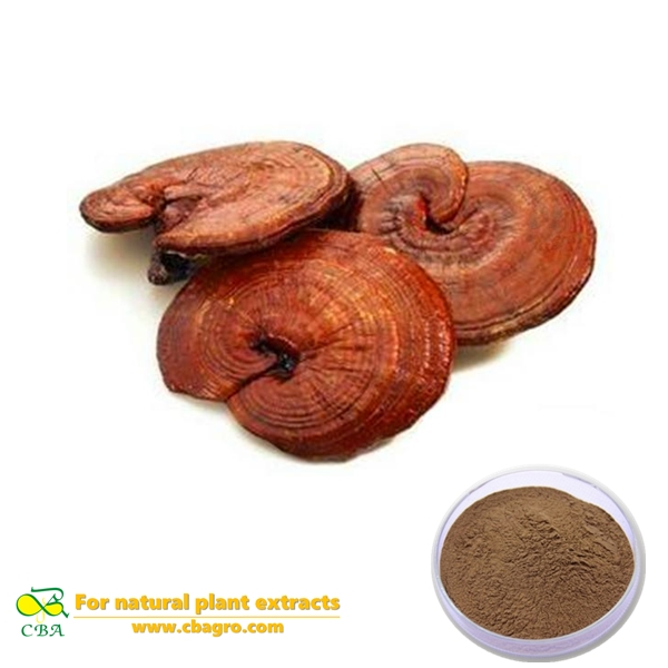 Ganoderma lucidum extract Natural pure ganoderma lucidum extract