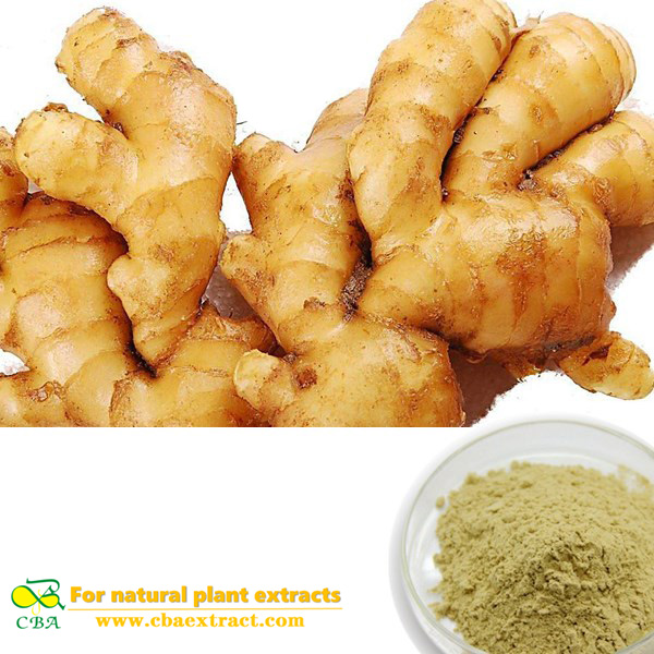 Top quality Organic Ginger Root extract for nausea Green Healthy Ginger Extract Powder Capsules