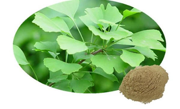 Top 7 Health Benefits of Ginkgo Biloba Extract
