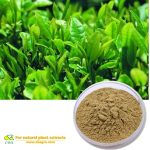 Green Tea Extract Catechins Natural herb extract