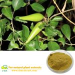 Gymnema sylvestre extract Gymnema Sylvestre Extract with Gymnemic Acids