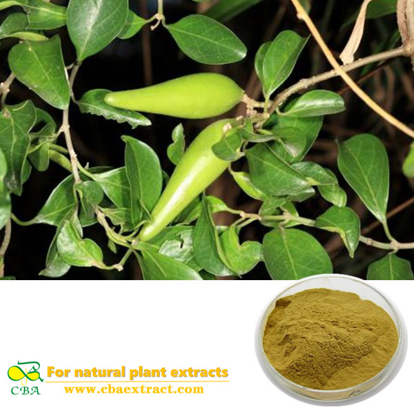 Gymnema Sylvestre P.E. Gymnema sylvestre extract Gymnema Sylvestre Extract with Gymnemic Acids