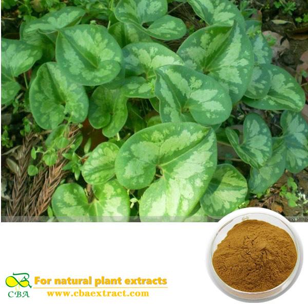 Herba Asari Extract Radix et Rhizoma Asari Wildginger Herb Extract Wildginger Herb Extract
