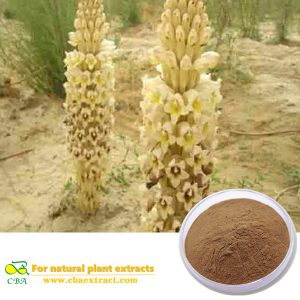 Desertliving Cistanche Herb Extract Cistanche tubulosa Extract Herb Medicine Chinese Herb Medicine Desertliving Cistanche Extract