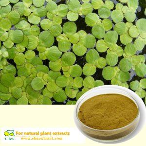 Herba Sprirodelae Extract Pure Natural Common Duckweed Extract Herba Sprirodelae Extract Powder Herba Sprirodelae P.E plant extract