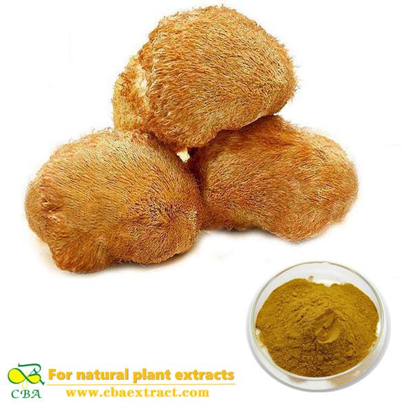 Hericium erinaceus P.E. Lion's Mane Mushroom Extract Hericium Erinaceus P.E. plant extract Bearded Tooth Mushroom Extract