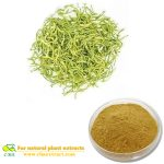 Japanese Honeysuckle Flower Bud Extract Flos Lonicerae extract Chlorogenic Acid
