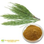 Horsetail Extract powder Verbena officinalis L Organic Silica
