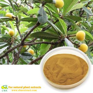 Loquat leaf extract ursolic acid powder 98%