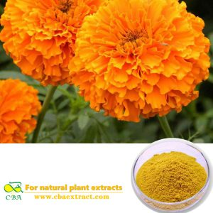 Food pigment Herbal Marigold Flower Extract Lutein Esters