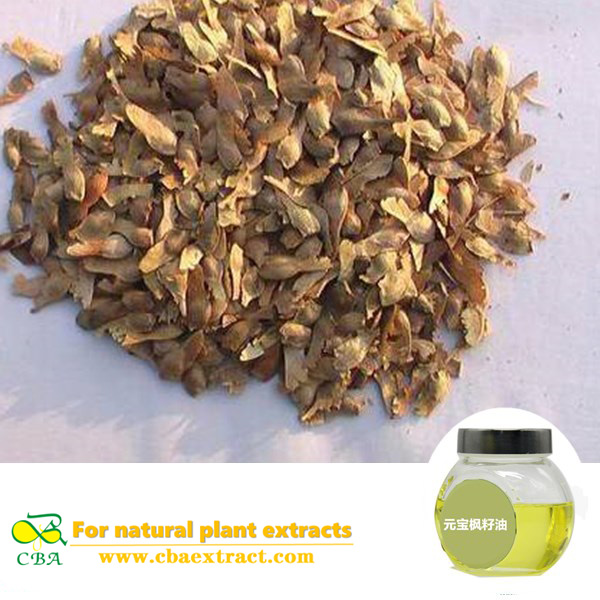 China 100% Natural Food Grade Maple Seed Oil