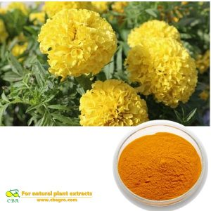 Marigold ExtractNatural Lutein Marigold Flower Extract Health Benefits Marigold Extract Lutein TageteserectaL. Esters Powder