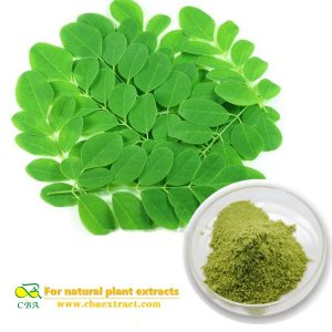 Factory Moringa leaf powder buyers with best price