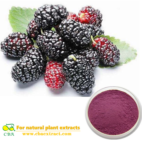 Natural Mulberry Leaf Extract Deoxynojirimycin polysaccharides mulberry leaf extract Chinese herb medicine good for heart