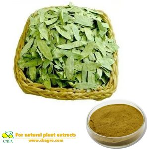 Natural Cassia Angustifoliaplant extract Cassia Angustifolia P.E plant extract Folium Sennae Extract senna leaf extract