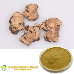 Natural Herb Szechwan Lovage Rhizome P.E. Rhizoma Chuanxiong Extract Levisticum officinale extract