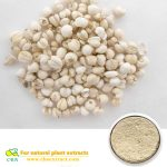 Herb medicine semen coicis extract coix seed extract