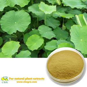 Natural Lotus Leaf Extract Natural Lotus Leaf Extract Powder With 2%-98% Nuciferine Lotus Leaf Extract