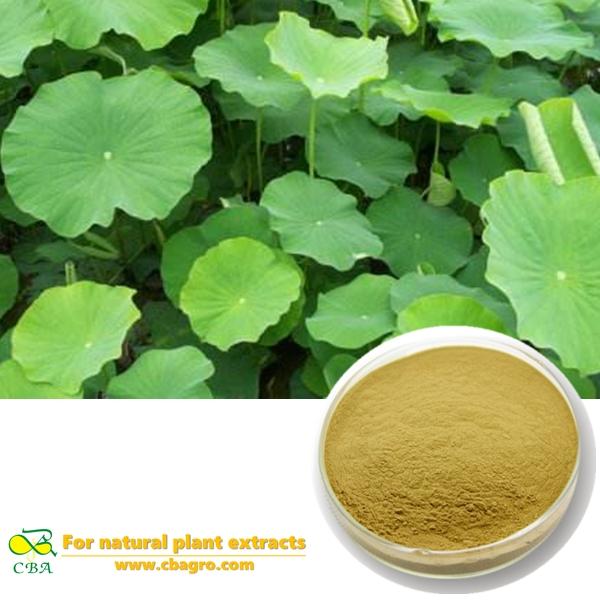 Natural Lotus Leaf Extract Natural Lotus Leaf Extract Powder With 2%-98% Nuciferine Lotus Leaf Extract