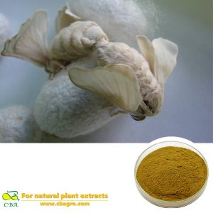 Natural Male Silkworm Moth Extract Bombyx Mori L Extract Xiong Can E Extract
