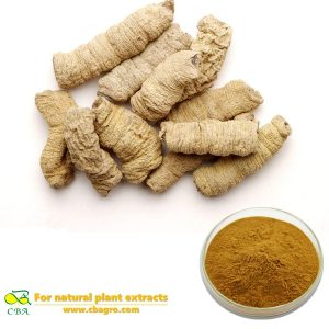 Natural Morinda Root Extract Morinda officinalis How extract medicinal plant extraction Medicinalmorindarootextract