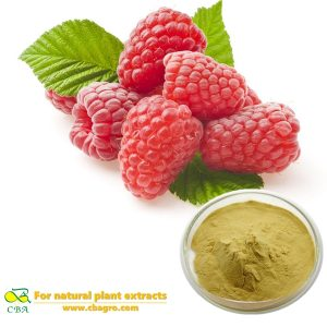 Natural Raspberry Extract -raspberry ketone for weight loss Rubus Chingii Hu Raspberry ketone