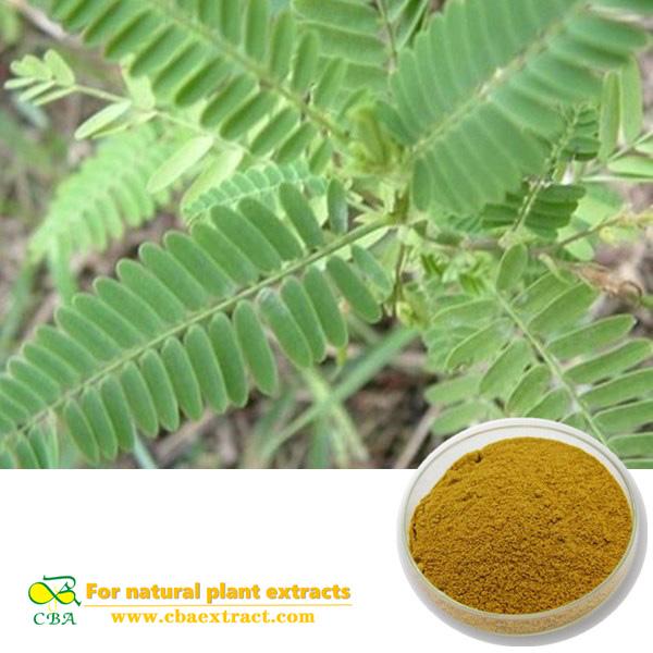 Nomame Semaherb Extract Cassianomame(Sieb.)Kitagawa Flavanols