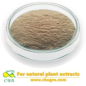 Oat Extract Beta GlucanOat Straw Extract Avena Sativa Extract